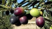 Andalucía representa el 95% de las compras de aceite a granel Hacendado Mercadona