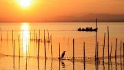 Cebrián reivindica en l'Albufera la col·laboració entre administracions en el Dia dels Zones humides