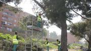 realizando trabajos formativos y prácticos de jardinería