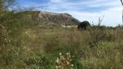 Estado que muestra l'Assut de la Marquesa de Cullera