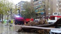 Intervención de los bomberos por la caída de un árbol