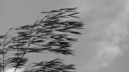 Rachas de viento en la Comunitat