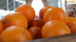 LA UNIÓ de Llauradors detecta parcelas de la mandarina híbrida Sigal en la Comunitat Valenciana que supuestamente no han pasado la cuarentena ni están saneadas