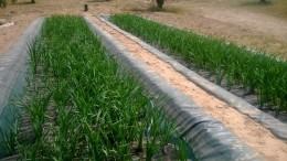Grupo Projar depura las aguas contaminadas en Portugal