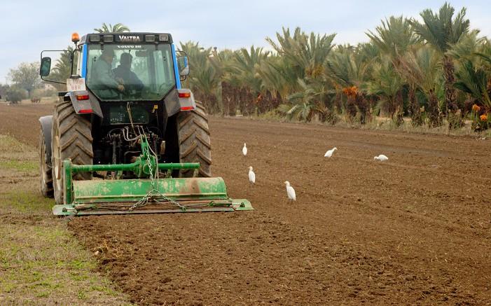 Un campo valenciano y jóvenes agricultores