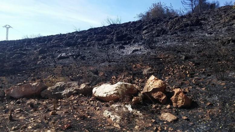 Incendios. Una de las zonas afectadas por el incendio de Carcaixent. Avamet