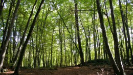 Bosque Fageda
