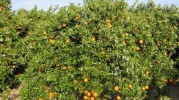 Calpe denuncia el intento de Agricultura de vaciar de funciones las oficinas agrarias en contra del sector