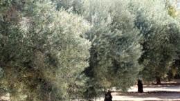 La Agència Valenciana del Turisme trabaja en el desarrollo de nuevos productos turísticos como la Ruta de los Cátaros y la Ruta de los Olivos Milenarios