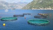 Las ayudas a la gestión sanitaria y de bienestar animal en la acuicultura tendrán en cuenta la prevención y la bioseguridad