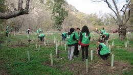 El IVAJ organiza cuatro campos de voluntariado de protección y defensa del medio ambiente