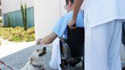 Ribera Salud y el Colegio de Veterinarios de Alicante crean un protocolo para permitir visitas de mascotas a los pacientes ingresados