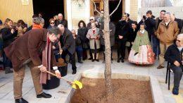 La calle de la Virgen María del Olivar recupera su tradicional pino